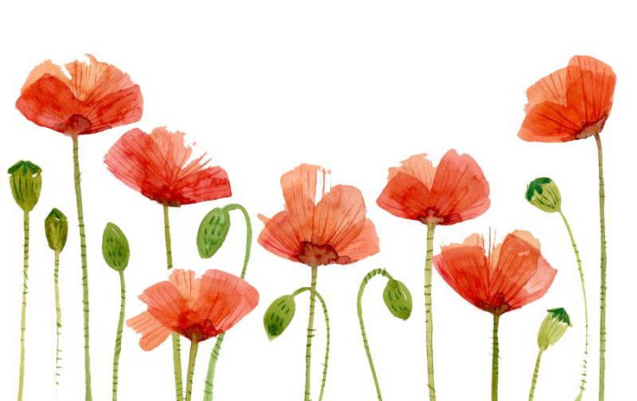6 Ways to Incorporate Remembrance Day in the Classroom